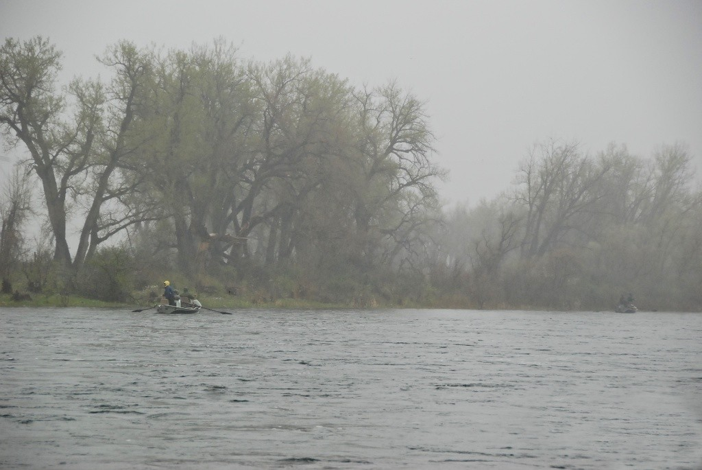 Bighorn-Rain